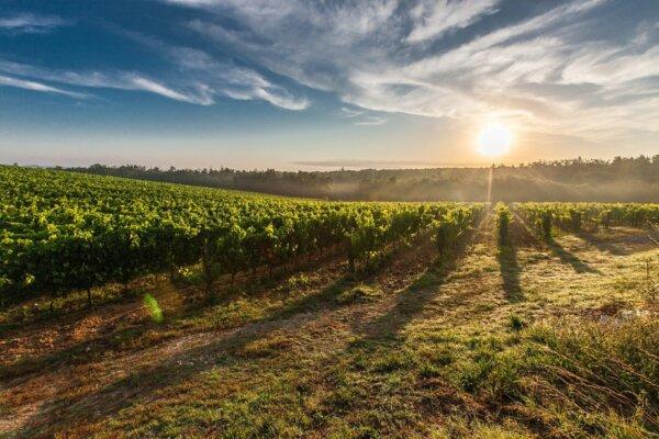 vinice v toskansku